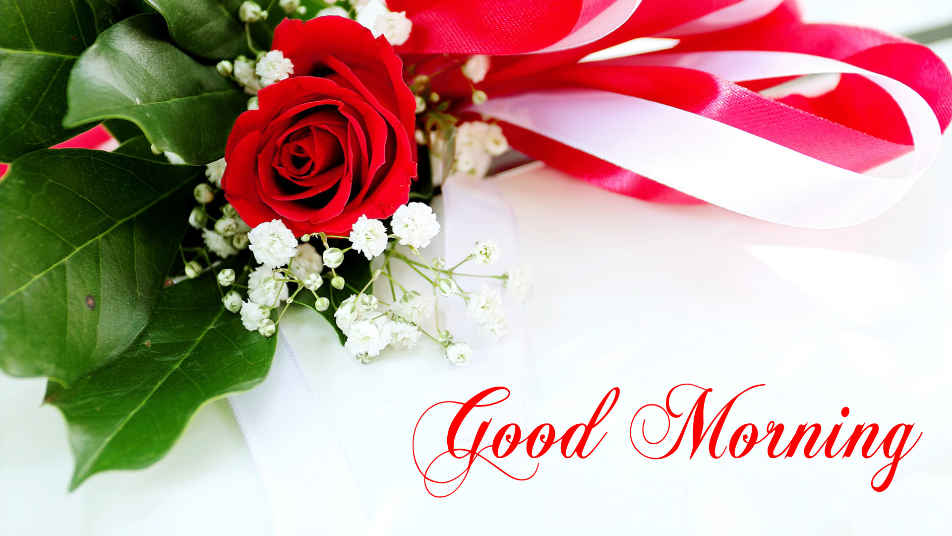 Good Morning Red Rose HD Images