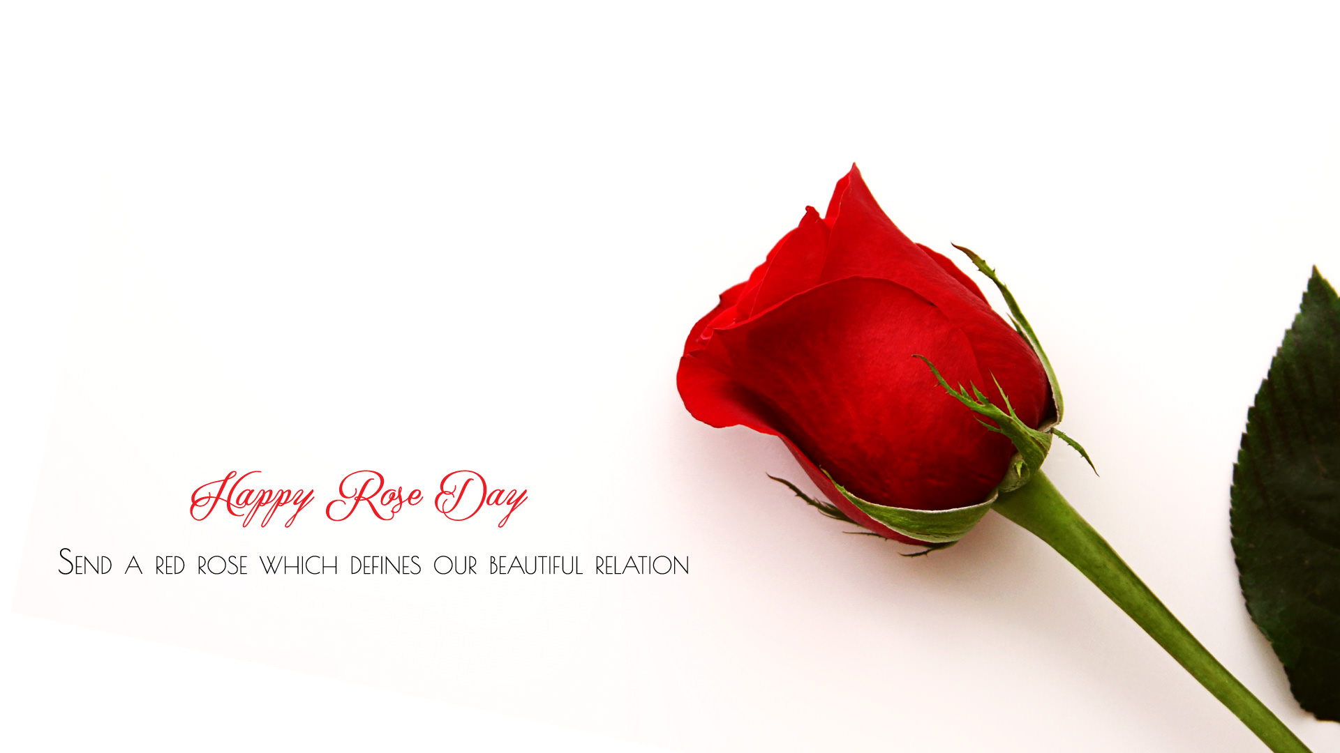 7th Feb Rose Day Wallpaper Hd All Color Of Roses For Lover Friends