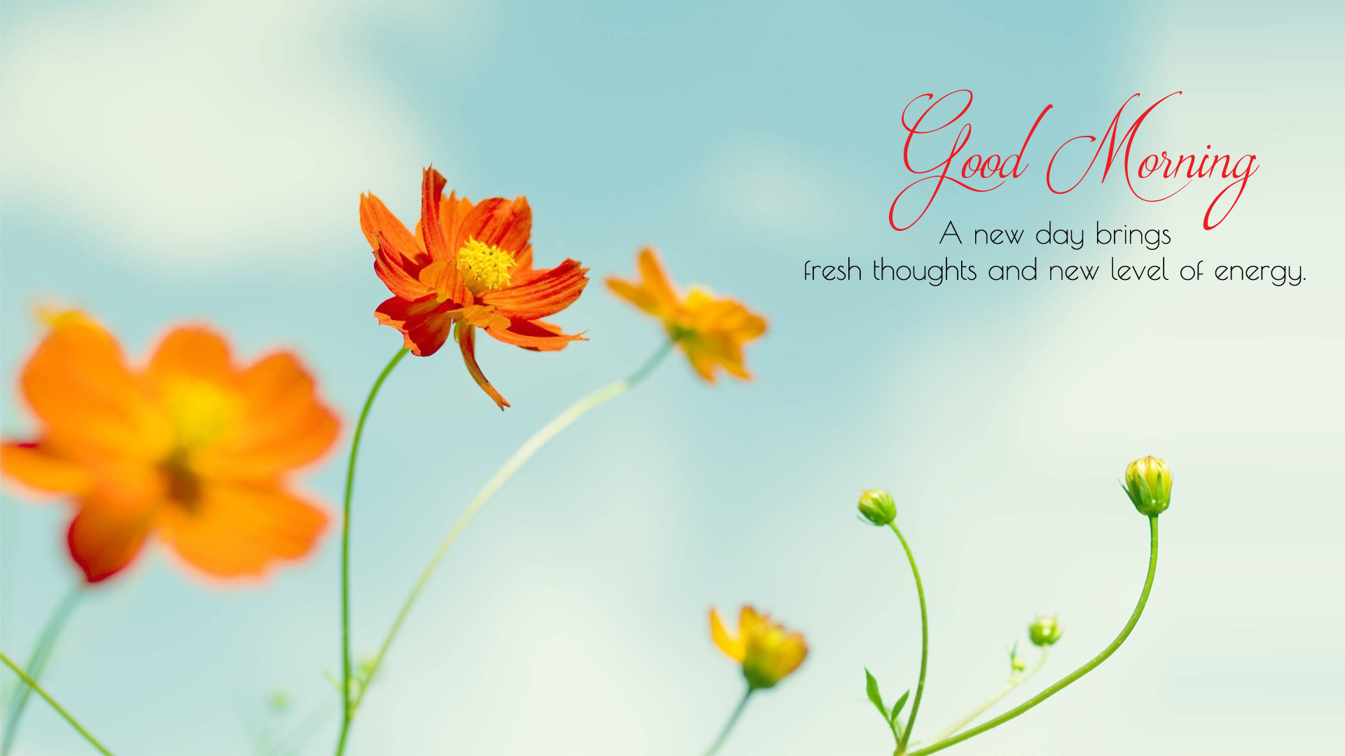 Gm Wallpaper With Love : Good Morning Wallpaper with Flowers, Full HD 1920x1080 GM Images