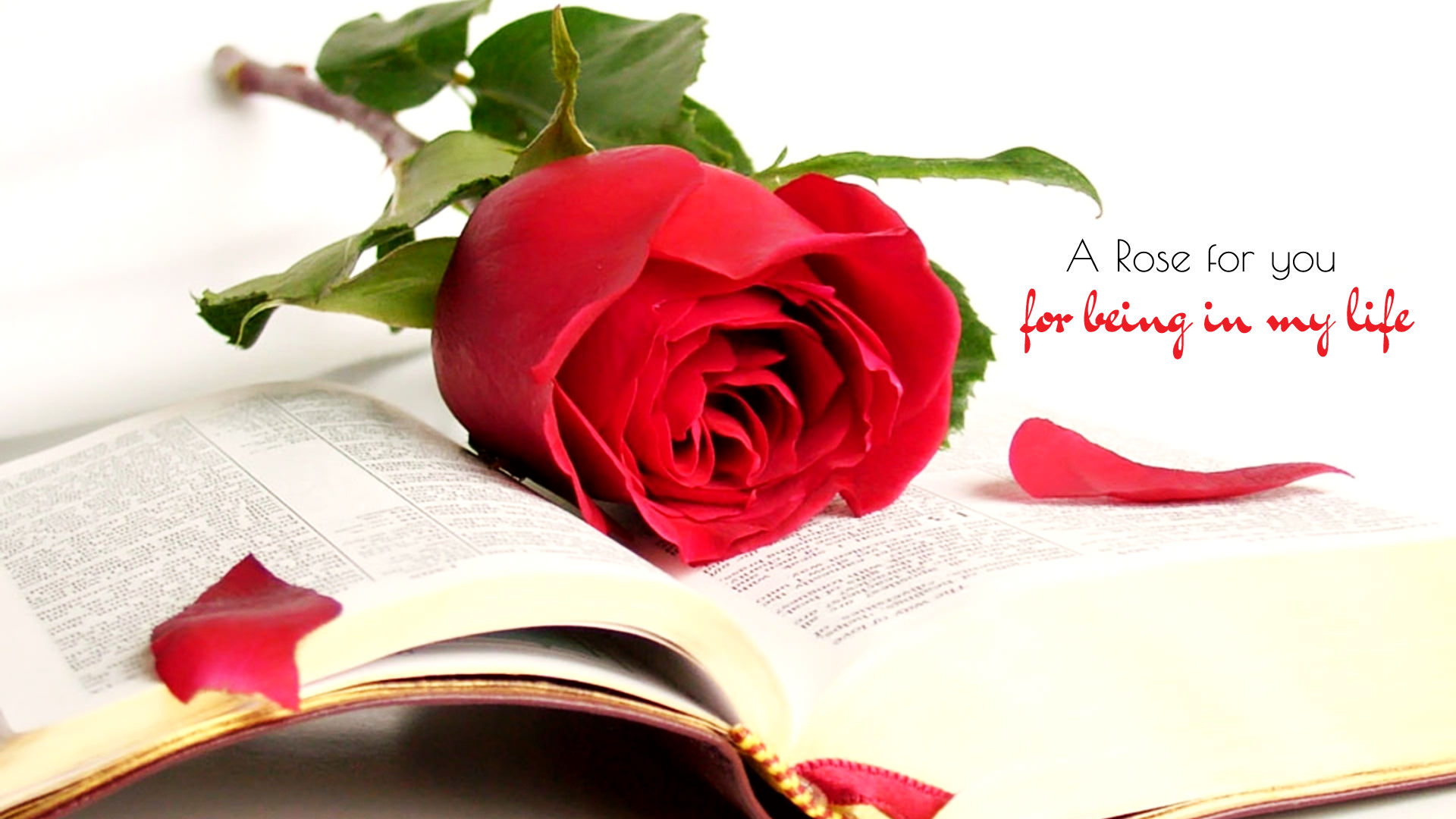 Rose Day Images for GF BF