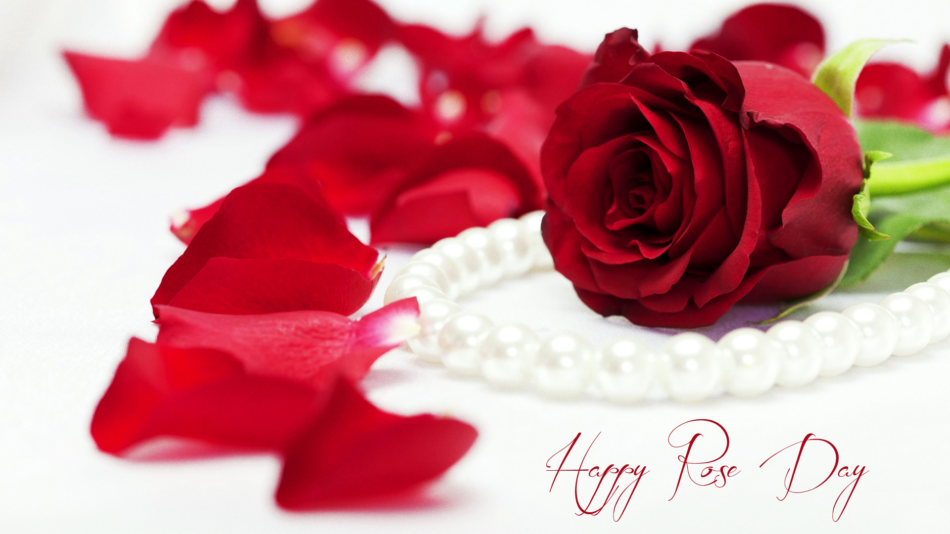 Single Rose Wallpaper for 1st day of Valentine Week