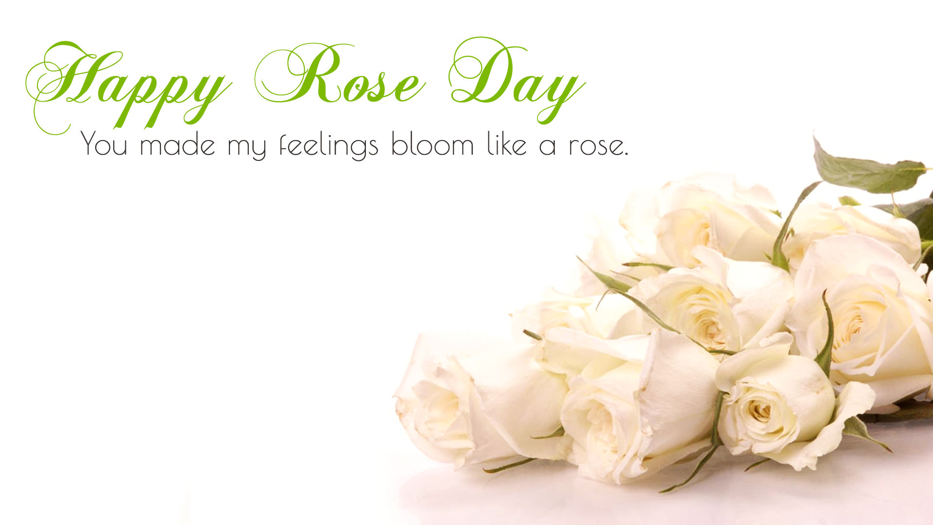 White Valentine Day Roses for 7th Feb Rose Day
