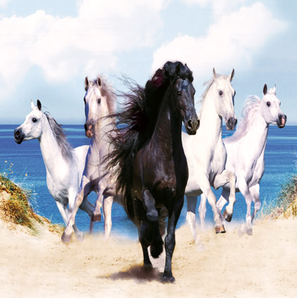 Black White Horses Photos