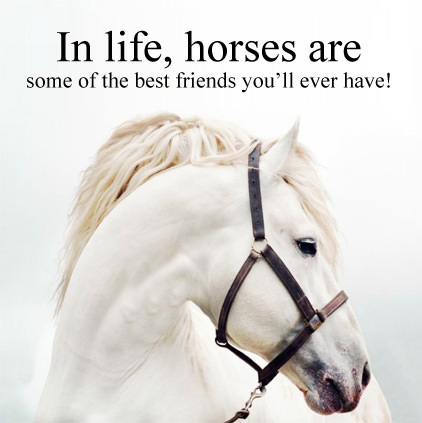Horse Quotes Images for Whatsapp