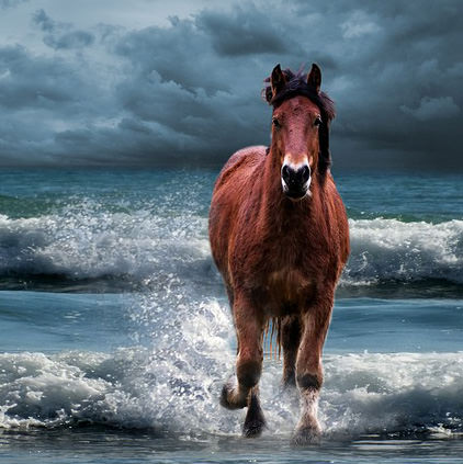 Horse in Water Beach DP