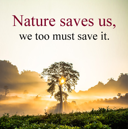 Nature Inspirational Saying DP Photo