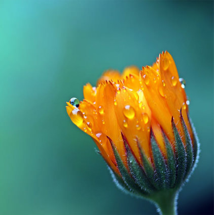 Flower Photos with Water Rain Drop