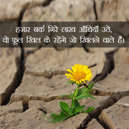 Flowers DP Images in Hindi for Whatsapp