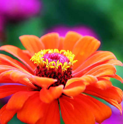 Orange Flower Images for Display Pictures