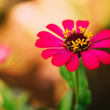 Red Pink Yellow Flowers Pictures