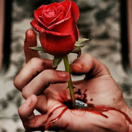 Rose with Blood Display Pictures