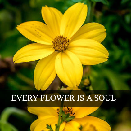 Yellow Flowers Dp Images for Whatsapp