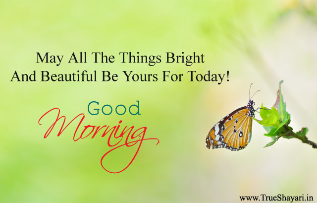 Morning Picture with Butterfly
