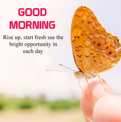 GoodMorning Butterfly Image with Quotes